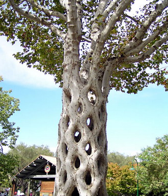 """""""Top 10 best trees in the world"""", beautiful trees"""